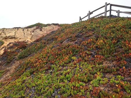 California, Point, Reyes, Flowers, Sky, Fencepost