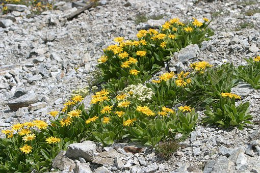Flowers, Yellow, Nature, Plant, Summer