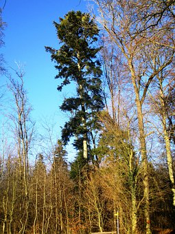 Green, Forest, Sky Blue, Tree, Atmosphere, Wood, Mood