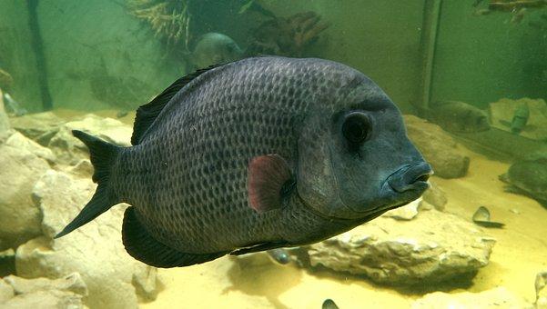 Fish, Fish Tank, Big, Underwater, Aquarium, Green, Sand