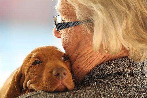 Young, Old, Puppy, Cute, Love, Dog, Hug, Vizsla, Woman