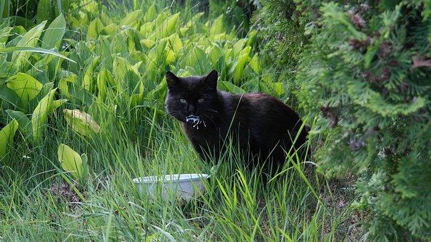 Cat, Animal, Pet, Black Cat, Domestic Cat, Animal World