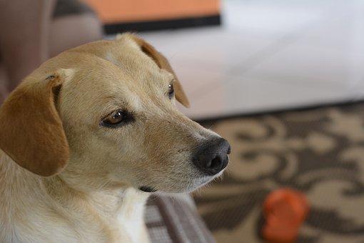 Dog, Pose, Animal