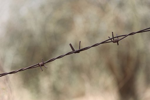 Barbed Wire, Wire, Barb Wire, Barbed, Barb, Prison