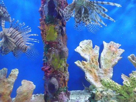 Fishes Poisonous, Aquarium, Fish