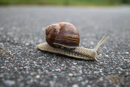 Snail, Slow, Shell, Mollusk, Close-up, Slimy, Nature
