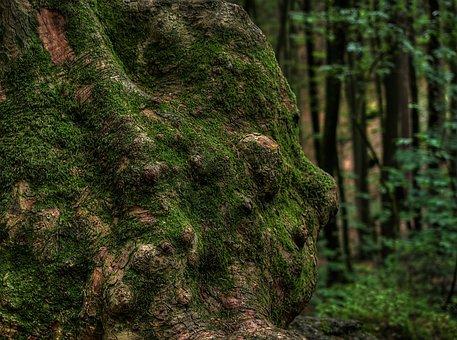Baumstammm, Knarzig, Moss, Forest, Green, Bemoost
