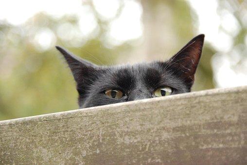 Animal, Pet, Cat, Eyes, Peep, Watch, Black