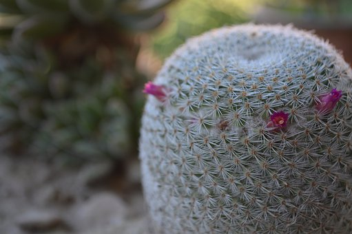 Cactus, Texture, Green, Plants, Barbed, Thorns, Flora