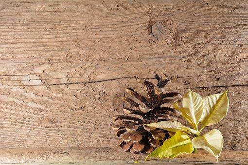 Wood, Background, Poinsettia, Blossom, Bloom, Flower