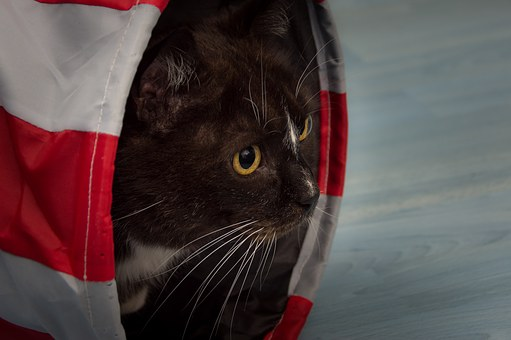 Cat, Tube, Outlook, Watch, Black, Red