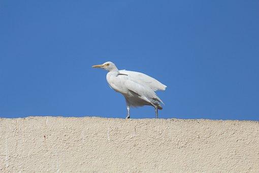 Egret, Cattle Egret, Roof Top, Bird, White, Sky, Blue