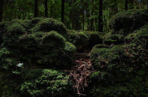 Moss, Forest, Green, Bemoost, Nature, Wild