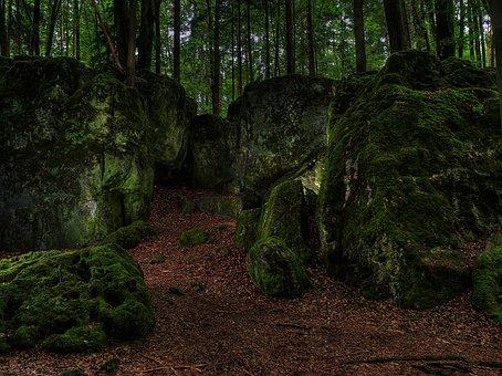 Moss, Forest, Green, Bemoost, Watercourse, Nature, Wild