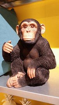 Ape On Shelving, Animal, Shopping, Purchasing