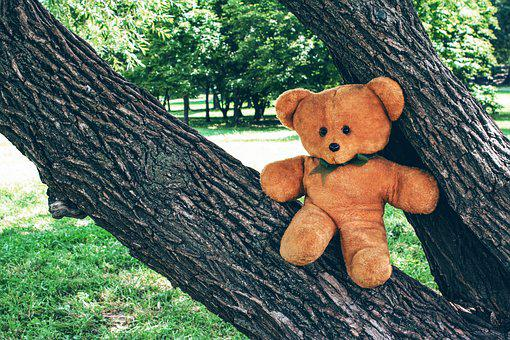Bear, Teddy, Toy, Soft, Childhood, Tree, Outdoors, Park