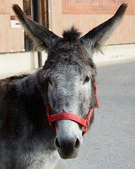 Donkey, Donkey Head, Head, Face, Portrait, Livestock