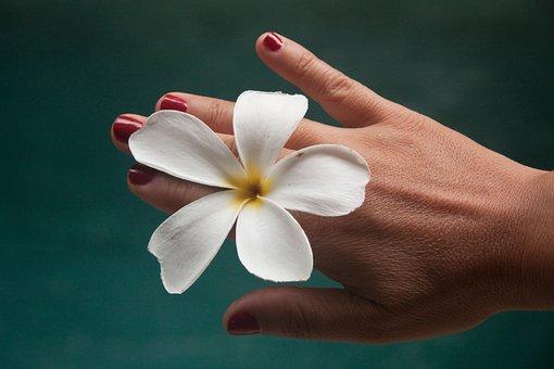 Flower, Frangipane, Hand, Woman