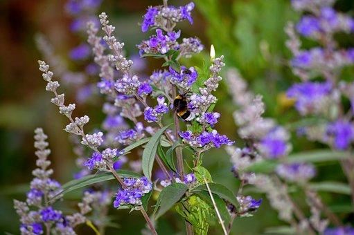 Monk Pepper, Bush, Plant, Green, Nature, Garden, Park