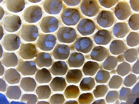 Bees, Diaper, Honey, Wasps, Cells, Drone, Hexagon, Hex