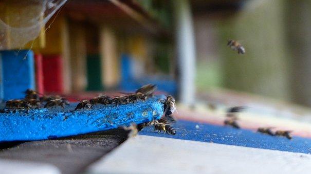 Beehive, Bee Apiformes, Hymenoptera Hymenoptera, Insect