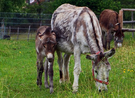 Donkey, Animal, Beast Of Burden, Mother, Child, Mare