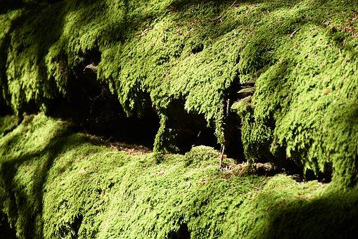 Moss, Green, Moss Carpet, Nature, Moss Growth
