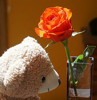 Old Teddy Bear With Rose, Teddy Bear, Toy