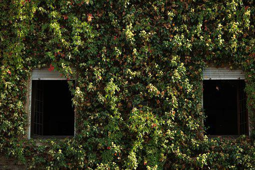 Window, Home, Overgrown, Old, Old House, Architecture