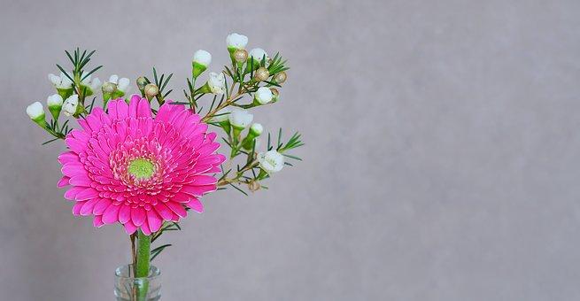 Gerbera, Flower, Blossom, Bloom, Petals, Pink