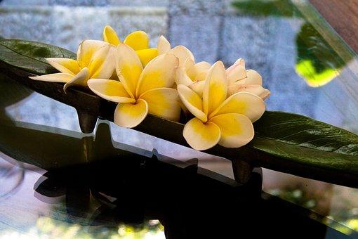 Plumeria, Flowers, Frangipani, Yellow, Flower, Exotic