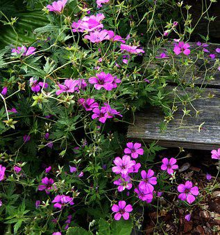 Small Flowers, Purple, Pink, Nature, Garden Plants