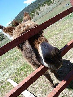 Donkey, Fence, Face, Head, Mammal, Animal, Farm, Rural