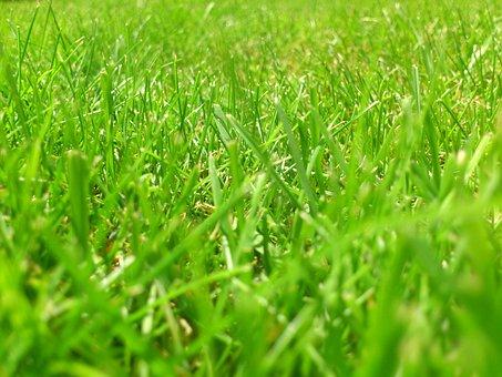 Meadow, Rush, Grass, Green, Blade Of Grass, Grasses