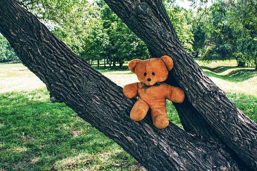 Soviet Union, Toy, Bear, Teddy, Soft, Childhood, Tree