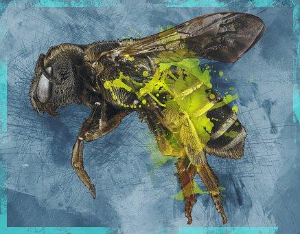 Bee, Halictus, Macro, Pollinator, Bug, Insect, Wings