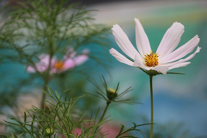 Flower, Beautiful, Artistic Conception, Universe Plant