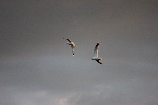 Seagull, Logs, Bird, Wings Outspread