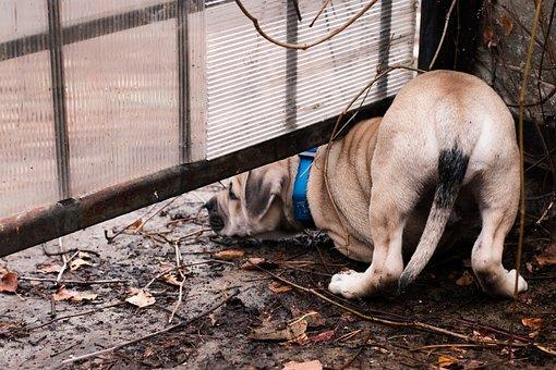 Dog, Puppy, Ca-de-bou, Autumn, Leaves, Branch, Sorrow