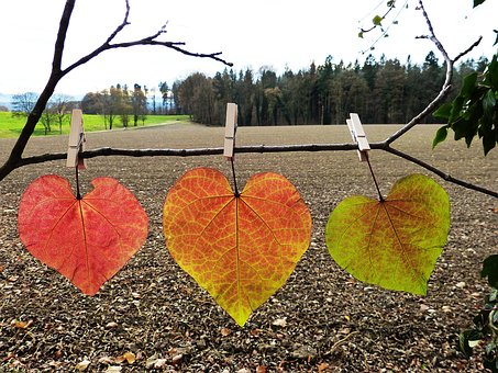 Leaves, Colorful, Autumn, Discolored, Heart, Letting Go