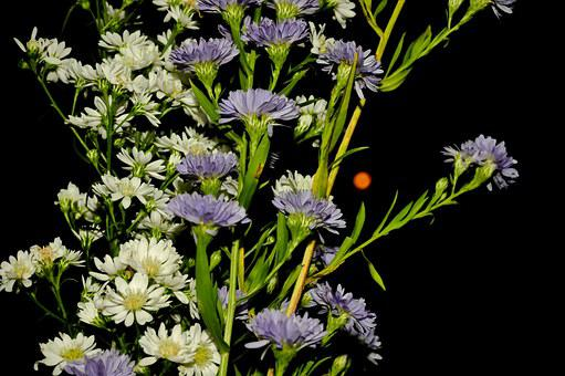 Flowers Of The Field, Lilac, Plant, Flora, Vegetation