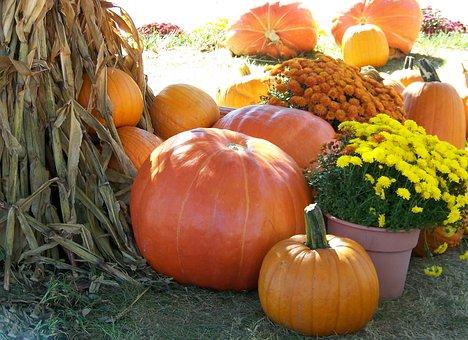 Pumpkins, Flowers, Cornstalks, Autumn, Fall, Halloween