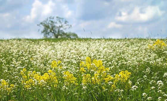 Nature, Landscape, Spring, Meadow, Flowers, Tree