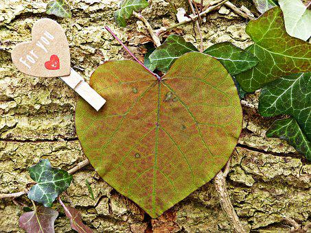 For You, Heart, Leaf, Love, Give, Romance, Gift