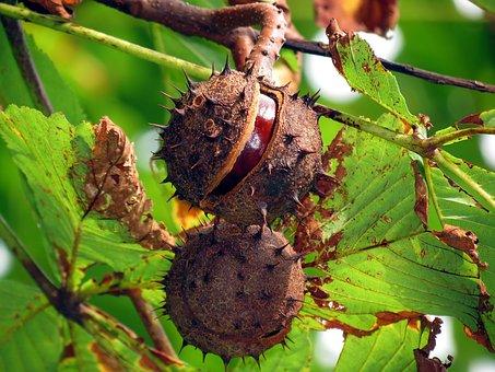 Malbam, Night, Fruit, Autumn, Nutty