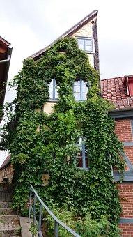 Halfway House, Quedlinburg, Ivy, Fachwerkhaus