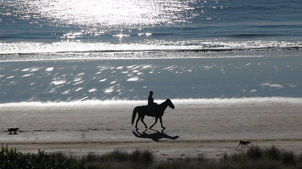 Horse, Beach, New Zealand, Dogs, Mount Maunganui