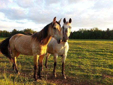 Horse, Horseback, Riding, Animal, Friendship
