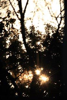 Sun, Trees, Sundown, Light, Radiating, Bright, Peeping