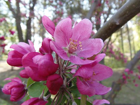Spring, Pink, Louise Hill Designs, Margaret Island